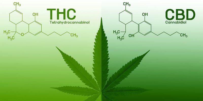 CBD vs THC : Quelle différence entre les deux cannabinoïdes ?